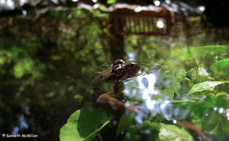 Frog Emerging