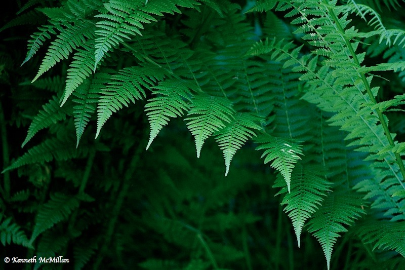 Fern Steps_watermarked