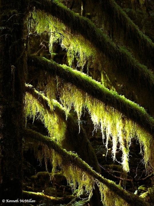 Cedar & Moss_2_watermarked