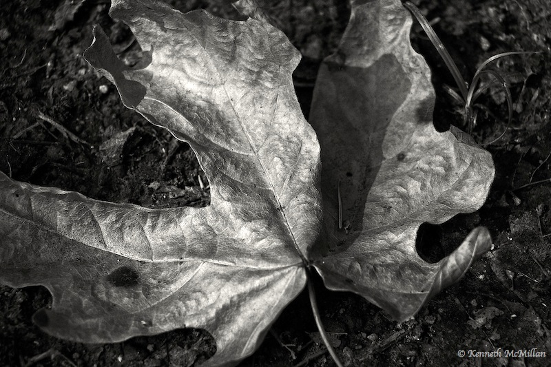 Fallen Leaf 02_watermarked