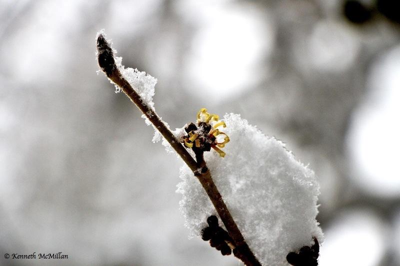 2013 Winter Snow 06_watermarked