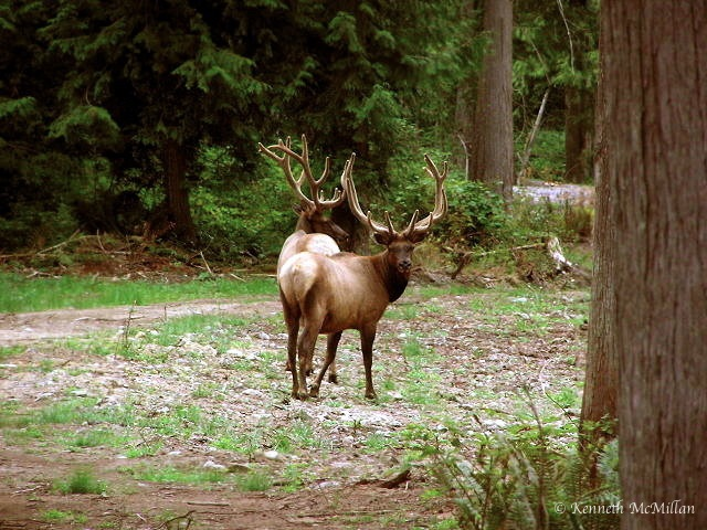 This was taken in July when the antlers are in their prime condition