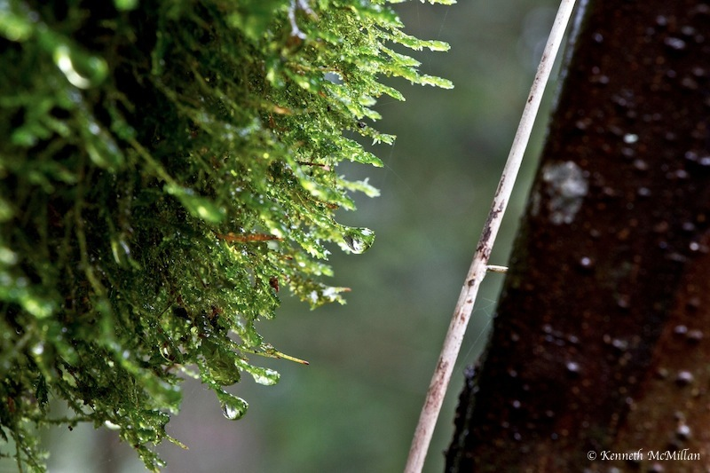 Rainy Moss_watermarked