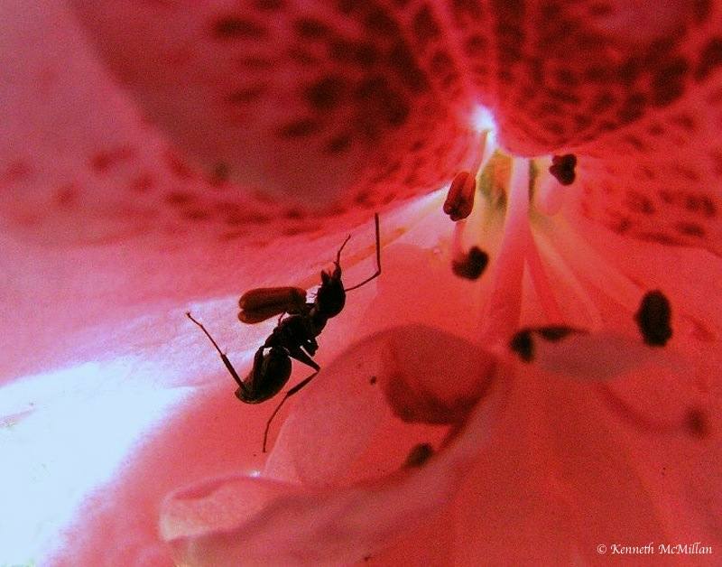 Ant & Azalea