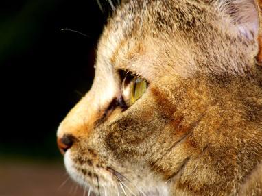 Tigger Profile