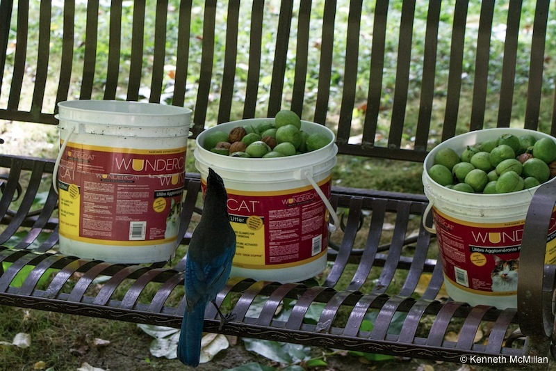 Picking out the shelled nuts