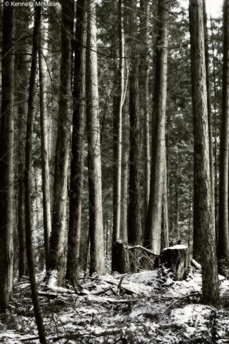 Winter Trees_watermarked