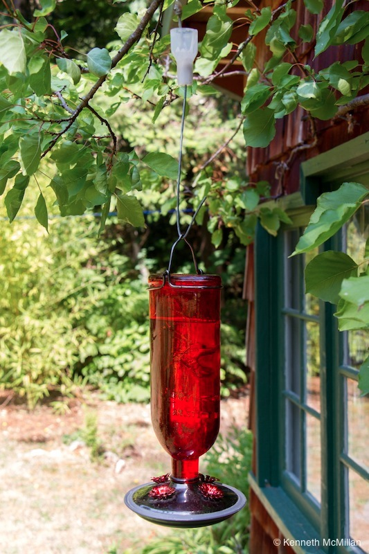 Feeder hanging on the apricot tree