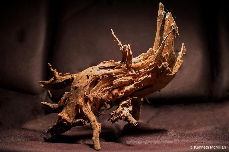 Termite Art 14_watermarked