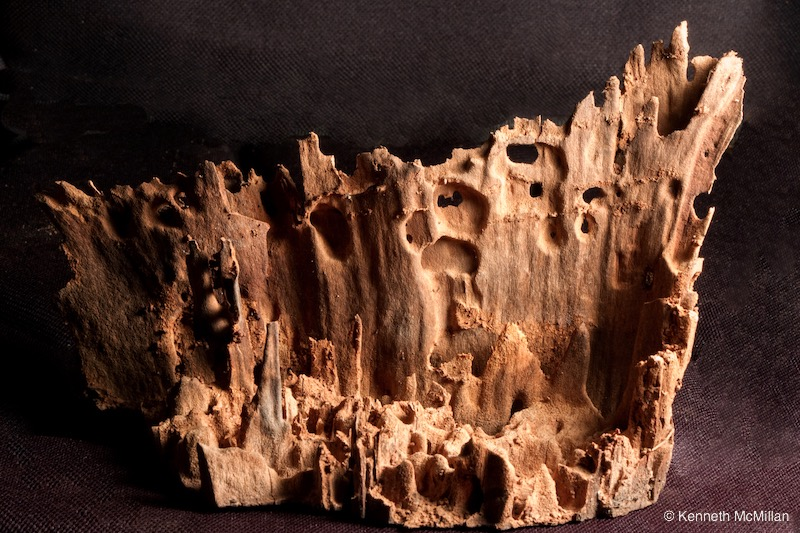 Termite Art 15_watermarked
