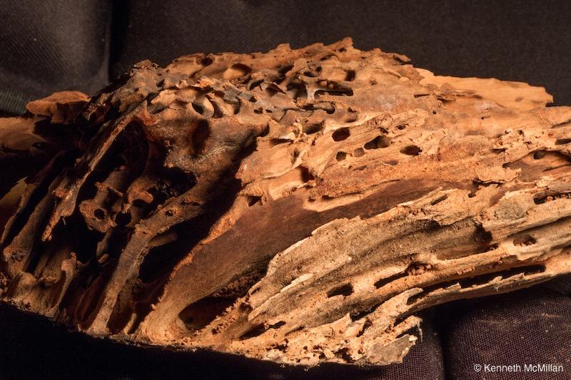 Termite Art 16_watermarked