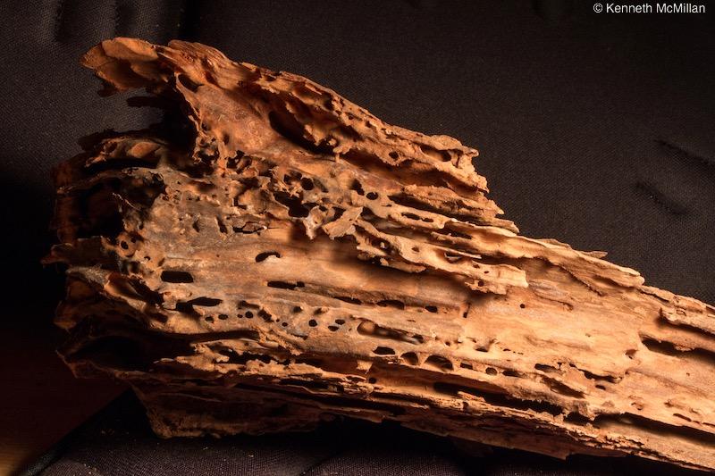 Termite Art 17_watermarked
