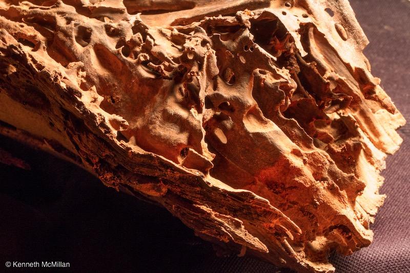 Termite Art 20_watermarked