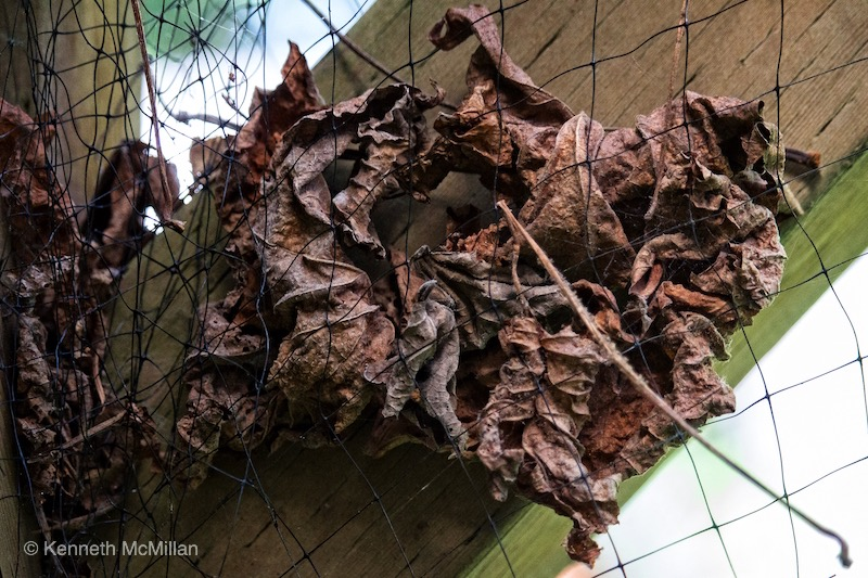 Dead Leaves_watermarked