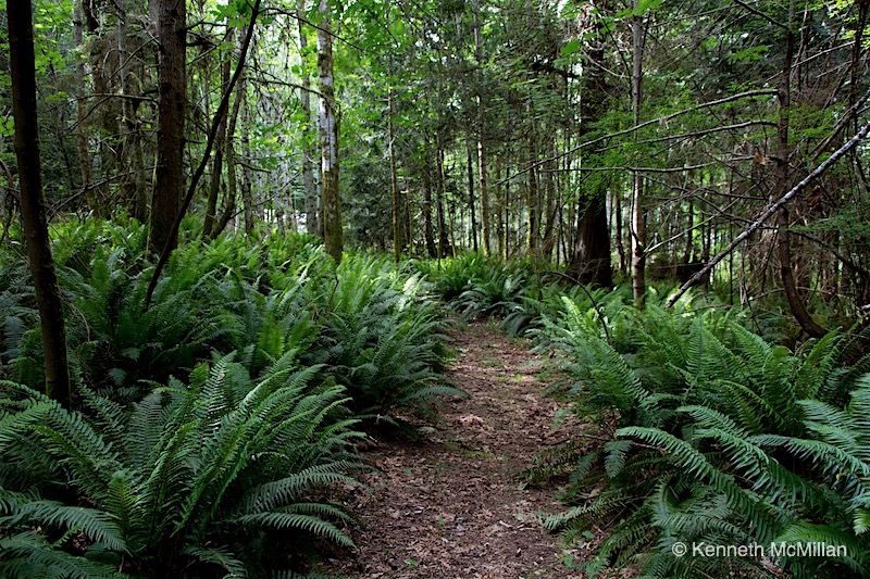 Forest Path_watermarked