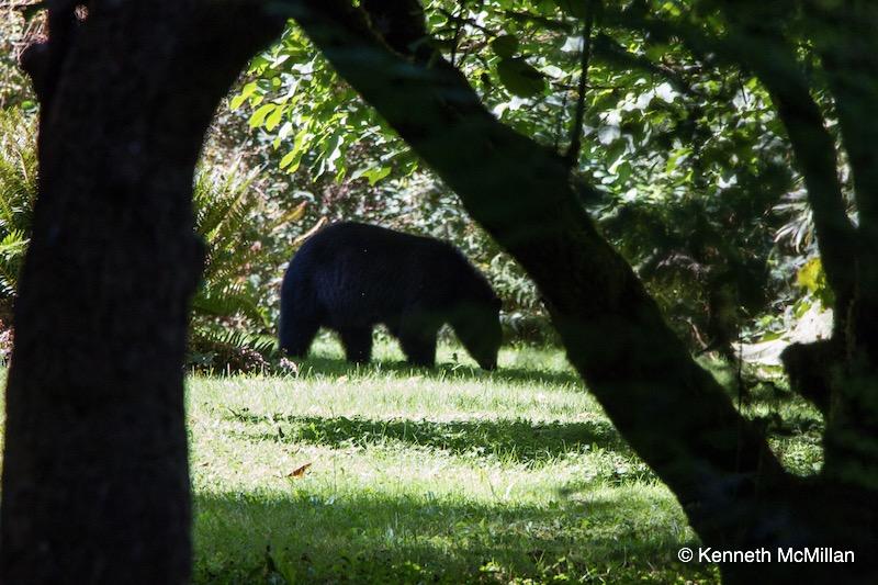 Bear Time 02_watermarked