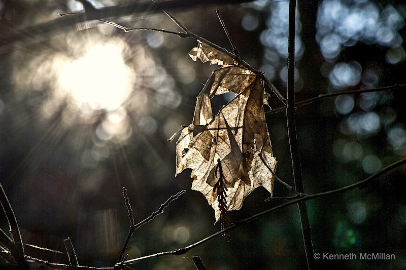 leaf-and-sunlight-2_watermarked